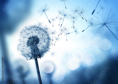 Dandelion In The Wind - 163852648