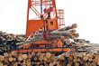 Loglift crane transferring logs to log stack