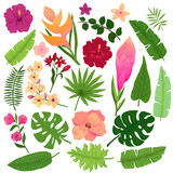 Vector Set of Vivid Exotic Flowers and Leaves in Watercolor Style - 163910837