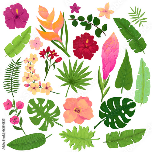 Vector Set of Vivid Exotic Flowers and Leaves in Watercolor Style