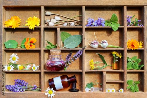 Heilpflanzen und Medizinfläschchen - 163927867