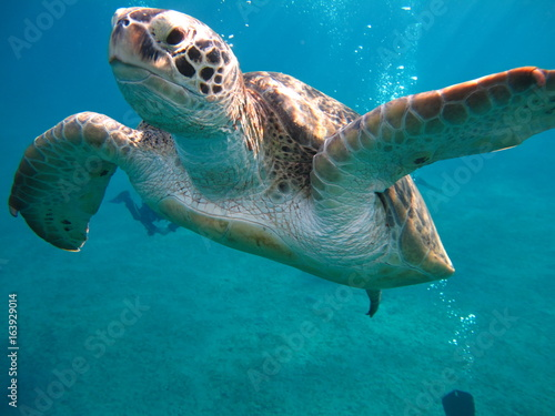 Foto Spatwand Schildpad tortue marine sea turtle marsa alam