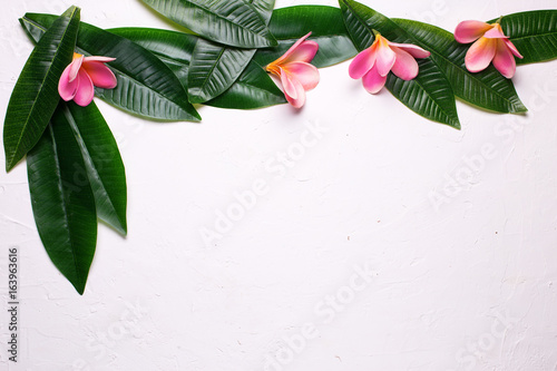 Aluminium Plumeria Border from bright tropical plumeria flowers and leaves on white textured background.