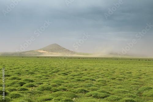 Tourbière en Mongolie