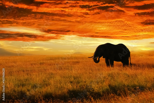 elephant-solitaire-contre-le-coucher-du-soleil-dans-la-savane-parc-national-du-serengeti-afrique-tanzanie