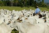 Fazenda de gado - MT - 163979251