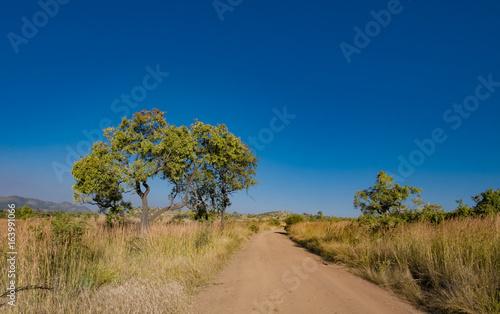 Dirt Road-Pilanesberg National Park, South Africa