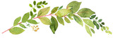 Green twigs watercolor decoration - 164013449