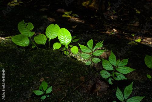 Staande foto Lelietje van dalen Fern and mos on rock waterfall.