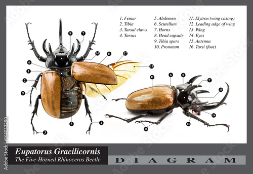 rhinoceros beetle | Buy Photos | AP Images | Search