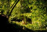 Dentro la natura selvaggia, nel giardino di ninfa