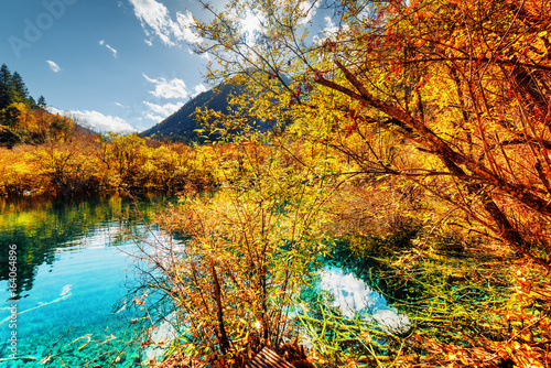 Amazing pond with azure crystal clear water among fall woods