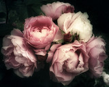 Beautiful bouquet of pink roses, flowers on a dark background, soft and romantic vintage filter, looking like an old painting - 164070439