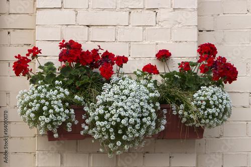 Fotobehang Azalea Potted flowers on the pillar