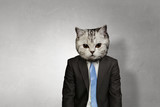 Cat in business suit. Mixed media - 164081427