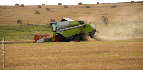 The combine harvests wheat and many straw bales background