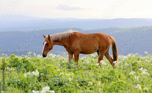 pretty horse grazing on green pasture