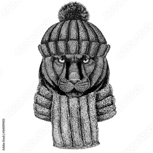 Panther Puma Cougar Wild cat wearing knitted hat and scarf