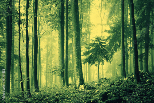 Magical green color saturated foggy light in forest landscape.