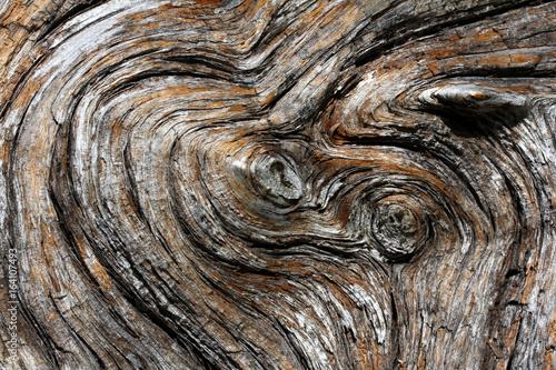l'anima del legno: venature in un tronco morto