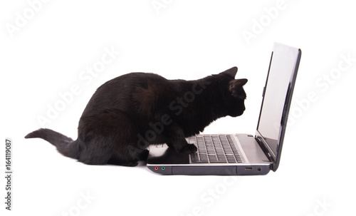 Side view of a black cat looking at a laptop screen, with her paws on the keyboard, on white background