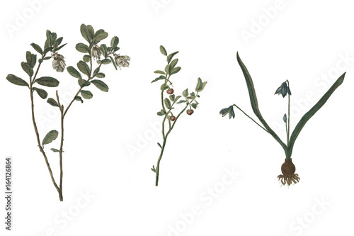 Nice flowers. Collection of flowers on a white background. - 164126864