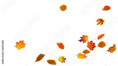 Leinwandbild Motiv fallende herbstblätter vor weißem hintergrund