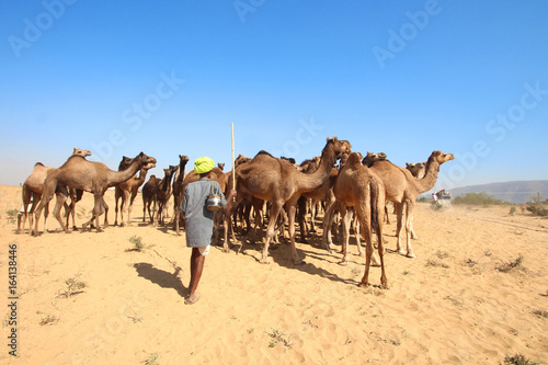 India / Pushkar Camel Fair