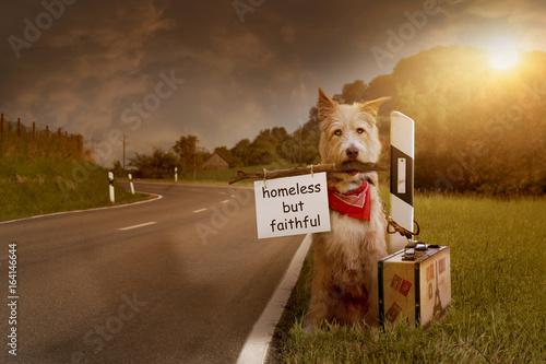 ausgesetzter Hund an Strassenrand