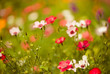 multicolor summer flowers background