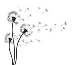Flower of field dandelion.  - 164149623