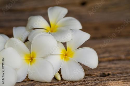 Frangipani flower/ Plumeria/ Temple Tree/ Graveyard Tree / wood background