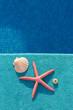Estrella, concha y erizo marino sobre fondo de color azul.