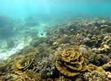 recif coralien