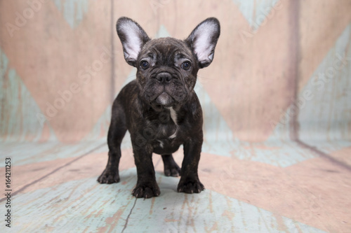 Foto op Canvas Franse bulldog French Bulldog on a pattern background