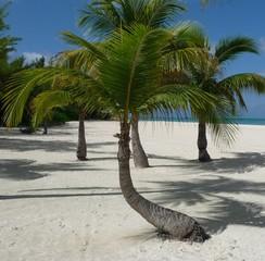 Palmen am Strand der Isla Pasion - Cozumel