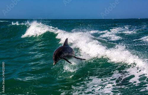Fotobehang Dolfijn Dolphin jumping over the waves