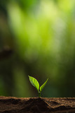 Plant a tree in nature,coffee tree,fresh - 164240246