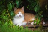 Cat lying in the yard