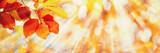 Fototapety Beech Leaves, Sunny Autumn