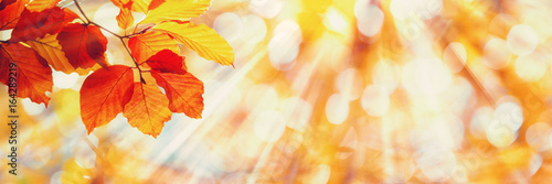 Beech Leaves, Sunny Autumn