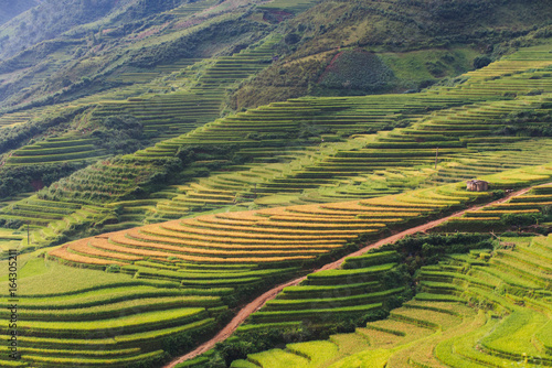 Fotobehang Beautiful landscape rice fields on terraced of Mu Cang Chai