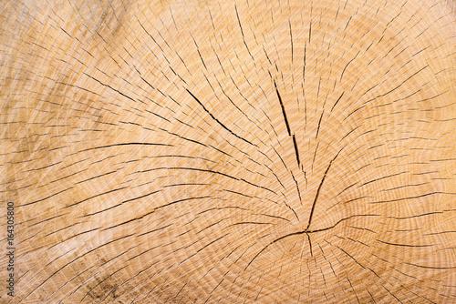 Holz, Baumschnitt Jahresringe als Hintergrund - 164305800