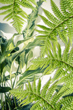 Exotic plants, fern leaves, artistic background - 164310815