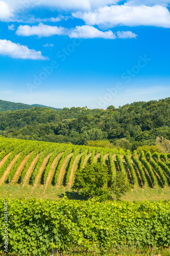Countryside landscape, vineyard in Daruvar region, Croatia