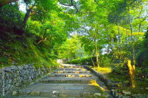 京都 新緑の北嵯峨の風景
