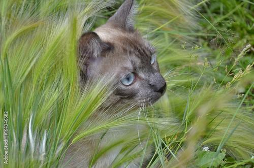 Poster кот