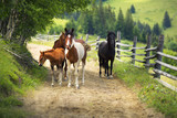 Horses on a Country Road