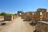 Fototapeta Horses - Roman Hippodrome in Tyre, Lebanon  © robnaw