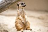 Zoo de la Palmyre 2017 - 164374023